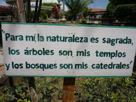 proteger los bosques
