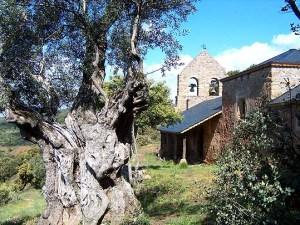 Iglesia de Santiago y olivo
